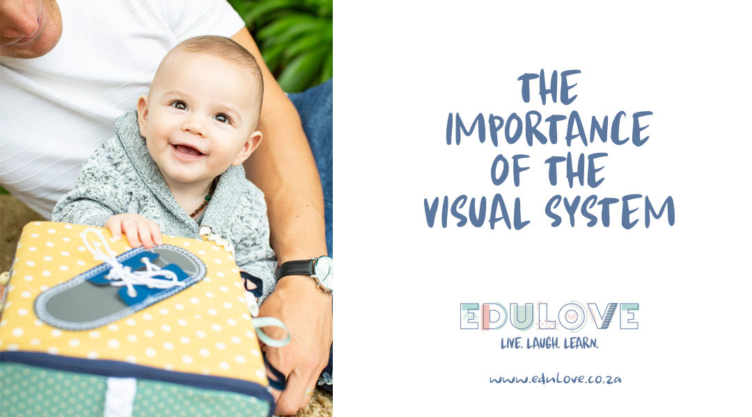 The visual system | Child Development | Edulove